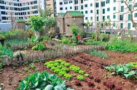 roof top vegetable garden roof garden pinterest rooftop vegetable