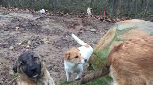 Tierheim Baden Baden Tierheim Hameln Welpen Aus Rumänien Suchen Ein Zuhause Youtube