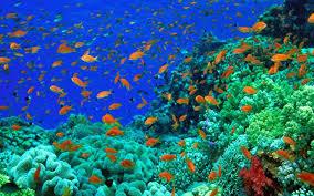 wallpaper ikan bergerak untuk pc 20 wallpaper bawah laut anime wallpaper hd