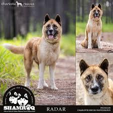 20 Great Dog Walks Around Sydney And Central Coast Australian Alaskan Malamute Rehoming Aid Aust Inc Home Facebook