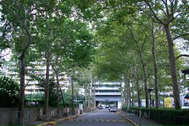 what are the 10 most common trees in new york city smart