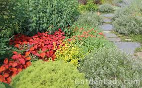 gardenlady com i love coleus