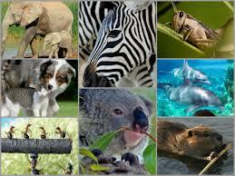 imagenes de animales y cosas pequeñas curiosidades sobre el reino animal que seguro no conocías