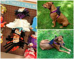 Vizsla Halloween Costume Neighbor September 2013