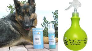 7 ways to keep your dog clean without having to give them a bath
