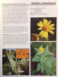 central texas native plants range plants of north central texas u2013 shop brit