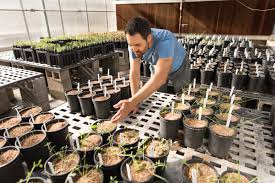 flagstaff native plant and seed nau researcher uses native species to restore the colorado plateau