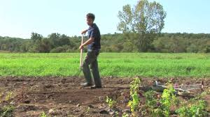 vegetable gardening how to plant a vegetable garden in rows