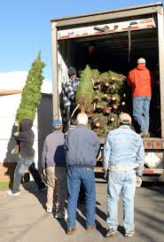 Natural Christmas Tree For Sale - st francis church christmas trees the fillmore gazette