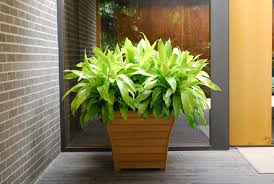 Low Light Flowering Plants by At A Glance Favorite Annual Plants Dirt Simple