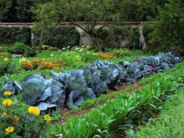 nonsensical vegetable garden design ideas 17 best about vegetable