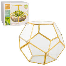 amazon com sphere glass terrarium succulent u0026 air plant