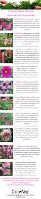 best 25 herbaceous border ideas on verbena flowers