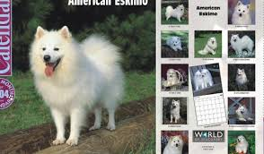 american eskimo dog rescue michigan wright u0027s american eskimos american eskimo dogs and puppies