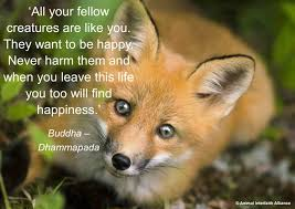 fox1 jpg