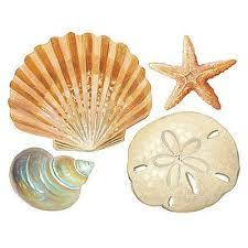 amazon com chsgjy new cute seashells wall stickers 24 decals amazon com chsgjy new cute seashells wall stickers 24 decals bathroom decorations shells ocean sea beach diy home kitchen