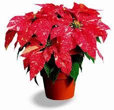 indoor plants india flower exporters fresh flower exporters flower suppliers fresh