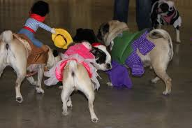 halloween costumes for pugs confessions of a pugophile
