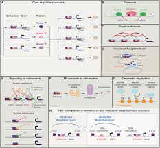 transcriptional addiction in cancer cell
