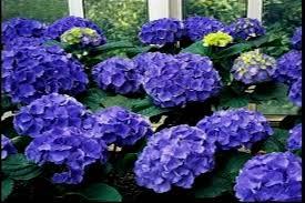 capricious garden flower names remarkable design 30 flower