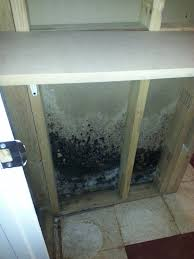 mold removal all brite cleaning u0026 restoration