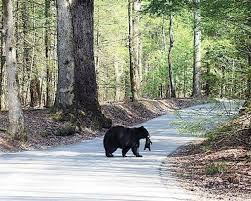 Tennessee wildlife tours images Tennessee mountain tours brochure jpg