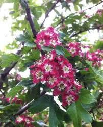 ornamental trees and interesting small ornamental