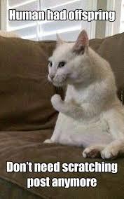 Success Cat Meme - semi evil success cat doesn t care about your kids by
