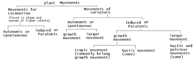 What Is Growth Movement Of A Plant Toward Light Called Plant Physiology What Is Nastic Movement Due To Growth