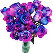 tie dye roses rainbow roses tie dye blue roses