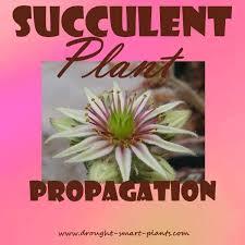 Our Favorite Plants How To by 144 Best Succulents U0026 Cacti U0026 Terrariums U0026 Orchids U0026c Images On