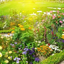 beautiful flower garden and sunrise stock photo picture and