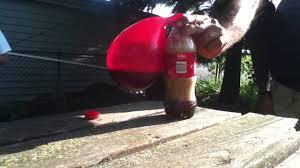 mentos balloon experiment coke youtube