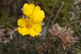 garden and flower show grampians wildflower walkabout 2016 melbourne