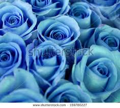 Blue Roses Blue Rose Flowers Free Stock Photos Download 16 316 Free Stock