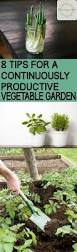 8 tips for a continuously productive vegetable garden bless my weeds