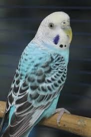 birds archives gilbertsville veterinary hospital