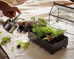 create your own closed terrarium in seven easy steps
