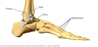 Skeletal Picture Of Foot Broken Ankle Broken Foot Symptoms And Causes Mayo Clinic
