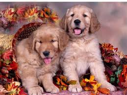 cute thanksgiving wallpaper backgrounds cute fall wallpaper backgrounds wallpapersafari