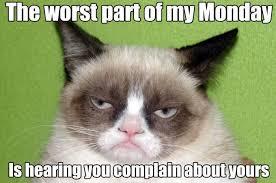 Funny Grumpy Cat Meme - 25 hilarious grumpy cat memes that sum up a cat s tough life