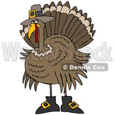 illustration of a silly thanksgiving turkey bird in pilgrim boots