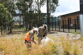 native plants sydney reconstructing western sydney grassy woodland understorey at
