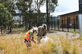 sydney native plants reconstructing western sydney grassy woodland understorey at