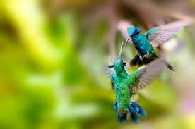 Hummingbird On A Flower - 9 adorable facts about hummingbirds mental floss