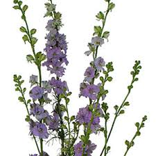 save on purple garden flowers fiftyflowers the blog