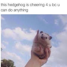 Hedgehog Meme - cheerful hedgehog animals know your meme