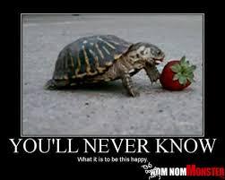 Nom Nom Nom Meme - one happy strawberry eating turtle 皓 nom nom monster