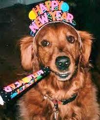 new year s setters pups celebrating the new year ilovedogsandpuppies