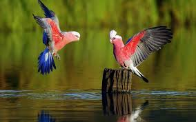 Wallpaper With Birds Parrot Bird Hd Wallpaper Android Apps On Google Play